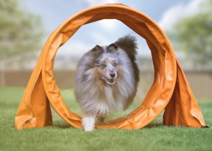Espaço Pet no condomínio é sinônimo de bem-estar e diversão